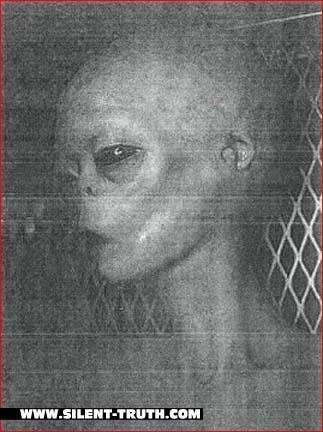 عکس بالا از دید یوفوشناسان جسد یکی از انواع فضایی هاست که در منطقه 51 یافت شده است ...